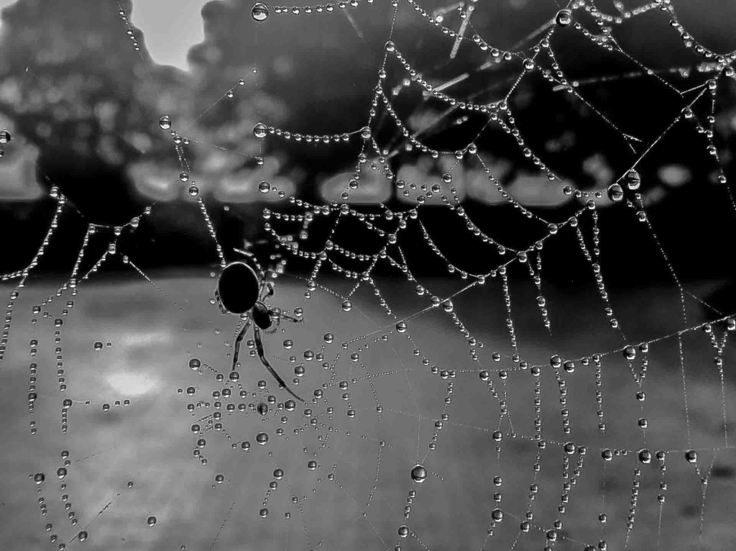02-jane-thomas-spider